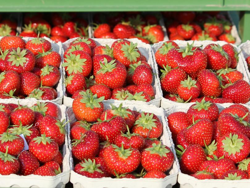 Erdbeerkörbe mit frischen Erdbeeren