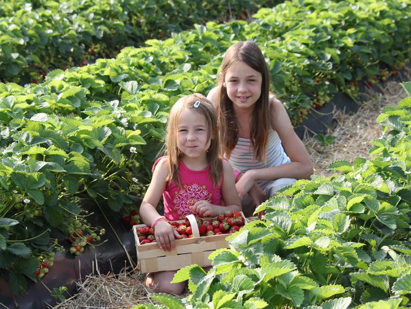 Kinder Erdbeeren