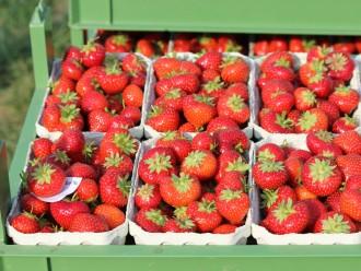 Erdbeeren Hof Westhues